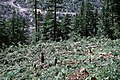 Gifford Pinchot National Forest, timber harvest operations-6 (36777745130).jpg