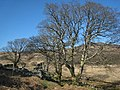 Glan Llyn y Forwyn. - geograph.org.uk - 398329.jpg