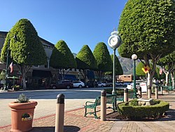 Glendora Village with its famous Ficus trees