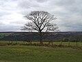 Goathland Tree.JPG