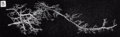 Grant 1962 157b.png