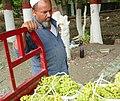 Grapes vendor Turpan.jpg