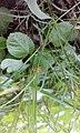 Grass spider.jpg