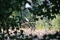 Graureiher fliegt auf im Naturschutzgebiet Lampertheimer Altrhein.jpg