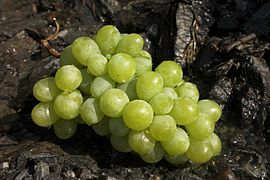 Green Grape 3.jpg