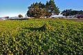 Green Grass (2078447349).jpg