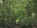 Green canopy - Lon Plas Driveway - geograph.org.uk - 491764.jpg