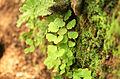 Green leaves image gl1.jpg