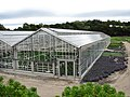Greenhouse at Wilson Farm, East Lexington MA.jpg
