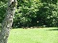 Grillplatz im Naturpark Schönbuch - panoramio - Qwesy (2).jpg
