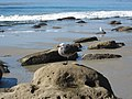 Gull (12035957025).jpg