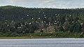 Gulls (Laridae) - Witless Bay, Newfoundland 2019-08-12.jpg