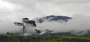 Gunung Gede Pangrango National Park - View of Gunung Gede from the nearby tea plantation