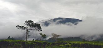 Mount Gede Pangrango National Park - View of Gunung Gede from the nearby tea plantation