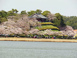 Cherry blossoms along Gyeongpo Lake.