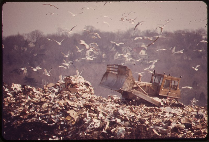 File:HACKENSACK DUMP IS FEEDING GROUND FOR GULLS. IN TIME THIS LANDFILL WILL PROVIDE RECREATION FOR THE BERGEN COUNTY... - NARA - 549741.jpg