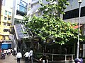 HK Central SOHO 些利街 Shelley Street Tree lunch time Sept-2011.jpg