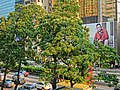 HK Wan Chai Gloucester Road Candlenut trees 石栗 view 124-131 Neich Tower POAD outdoor ads Chow Yun Fat.JPG