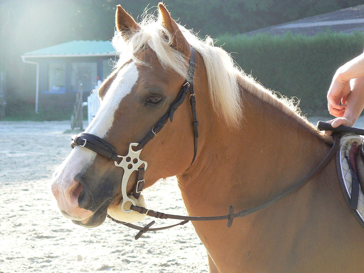How to Choose a Hackamore | Animals - mom.me