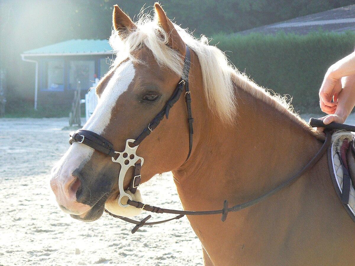 Hackamore Bits - Western Hackamores - HorseLoverZ