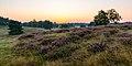 Haltern am See, Westruper Heide -- 2015 -- 8242.jpg