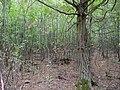 Hambach forest 21.jpg