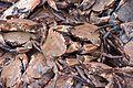 Haul of crabs (25839774644).jpg
