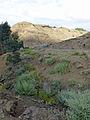 Hauts plateaux d'Ethiopie-Région Amhara (20).jpg