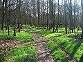 Haw Park Woods. - geograph.org.uk - 151780.jpg
