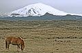 Hekla and horse.jpg