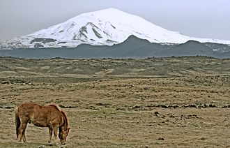 Hekla - Hekla in 2006 and an Icelandic horse