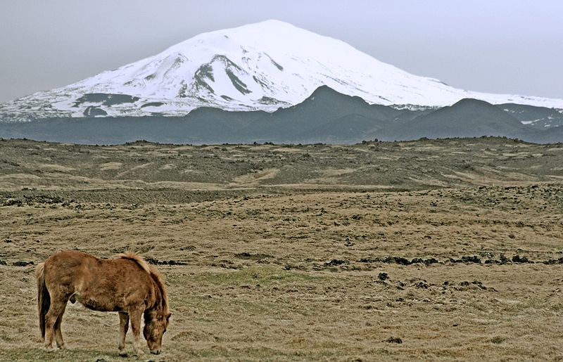 File:Hekla and horse.jpg
