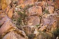 Hellhole Canyon juniper (13496396105).jpg