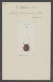 Hetaerius - Print - Iconographia Zoologica - Special Collections University of Amsterdam - UBAINV0274 017 02 0061.tif