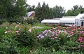 Hillwood Gardens in July (19613991548).jpg