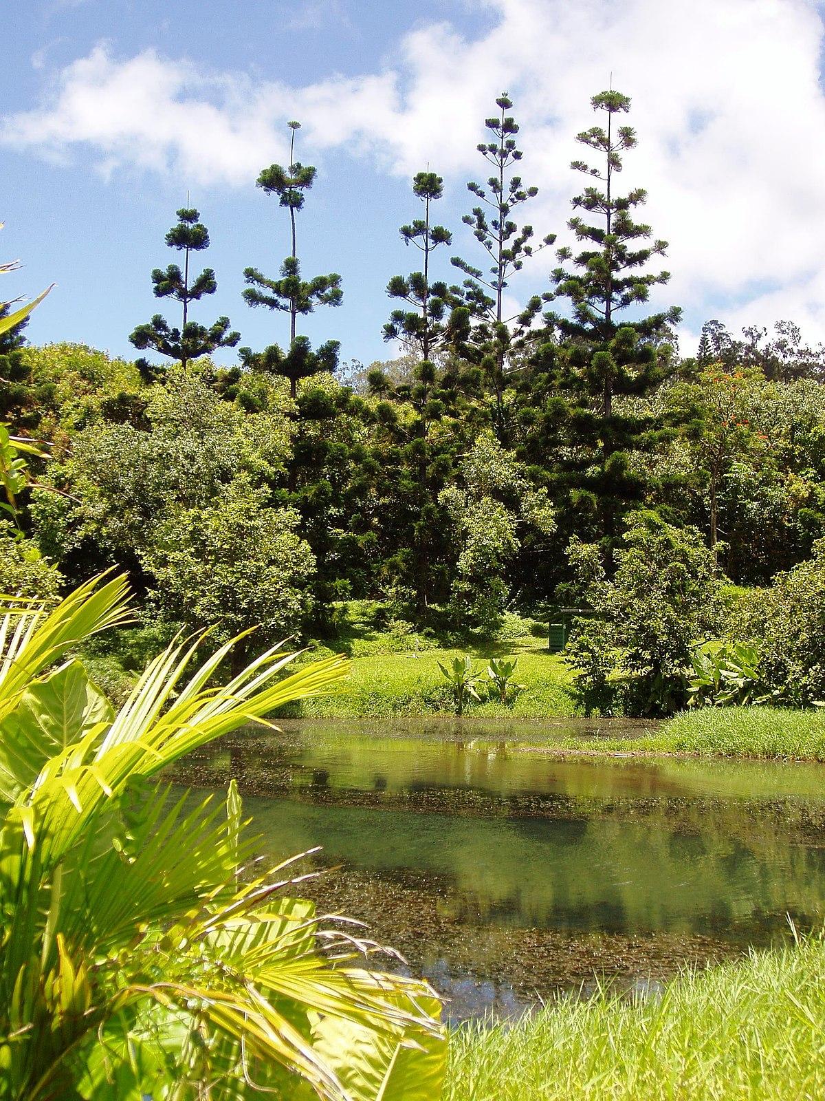 Pictures Of Garden Pathways And Walkways: Hoʻomaluhia Botanical Garden