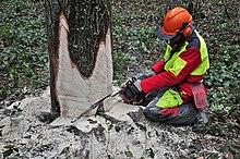 Bäume fällen anleitung