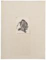 Homo sapiens - Eowah-indiaan, Noord-Amerika - 1700-1880 - Print - Iconographia Zoologica - Special Collections University of Amsterdam - UBA01 IZ19500172.tif