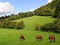 Horses grazing at Speen - geograph.org.uk - 935691.jpg