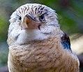 Houston Zoo 2010 -4 (5309318717).jpg