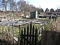 Hummersknott Allotments . off Cemetery Lane - geograph.org.uk - 136489.jpg