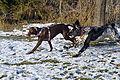 Hundebegegnungszone Kaprun 13.JPG