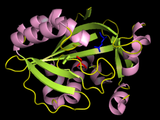 Isopentenyl-diphosphate delta isomerase - A cartoon diagram of human IPP isomerase with the catalytic cysteine residue (Cys87) in red and the catalytic glutamic acid residue (Glu149) in blue (RCSB Protein Data Bank accession number 2ICJ).