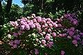 I fiori del giardino.JPG