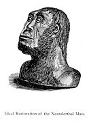 Ideal restoration of the Neanderthal Man - A manual of the antiquity of man, 1875.jpg