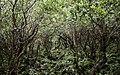 Ilha das Flores P5260049 (35621105010).jpg