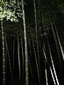 Illuminated Sagano bamboo forest 12.jpg