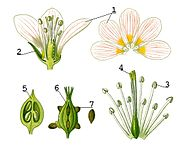 Illustration Flower anatomy1.jpg