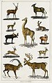 Illustration from A History of the Earth and Animated Nature by Oliver Goldsmith from rawpixel's own original edition of the publication 00081.jpg