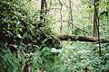 Im Wald der Amurleoparden.jpg